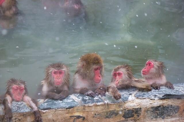 お風呂で免疫力アップ!